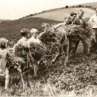 Old pic holding hay on the hill
